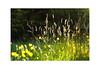 Grasses n Flowers