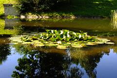 island_2 (grzegorz_63) Tags: park reflection water pond fujifilm fujixs1