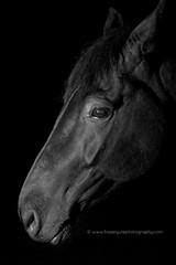 seamus (fyule903) Tags: portrait horse black dark nikon moody lowkey equine