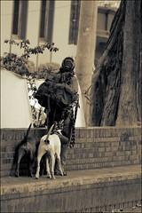 People 49 (Alex D .) Tags: viaje people blackandwhite bw dog black amigos blanco beautiful colombia bogota gente negro bn personas personajes