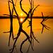 Golden Lake Bonney