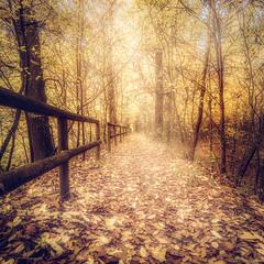 Nel Parco-5 (Roberto Gaudenzi) Tags: alberi trees boschi woods autunno autumn parco yellow