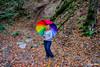 2016 yedigöller (SONER DİKER) Tags: yedigöller tabiyatparkı sonbahar bolu