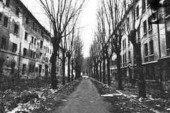 Ghost street. (Denisa Colours of Decay) Tags: abandoned urban exploration urbex forgotten lost street depresive sad nikon decay trees