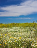 IMG_5192-1 (Andre56154) Tags: spanien spain andalusien andalusia blume flower wiese willow weide himmel sky wolke cloud heiter
