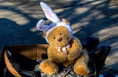 Teddy left alone on the sidewalk (Poupetta) Tags: stuffedtoy bear portland unwanted