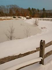 Foxboro Cranberry Nature Trail 7 (dennisgg2002) Tags: foxboro massachusetts ma cranberry bogs winter new england snow landscapes