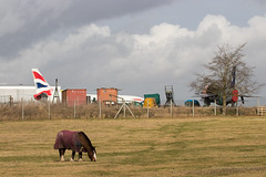 Horsepower (Al Henderson) Tags: egtc airfield airport t4 aviation 737400 horse cranfield lightning bedfordshire xs458 gdocb boeing737 englishelectric england unitedkingdom gb