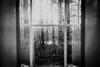 Overlooking (Andrezza Haddaway) Tags: bw window overlooking view life music trees pond home