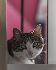 Ternura! (infinitum Photography & Video Production) Tags: infinitum infinitumstudio nikon d750 chat gato katz cat minou minet 85mm gata minette gatto gatti