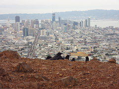 IMG_1855 (NapoleonIsNotDead) Tags: california san francisco city stanley kubrick birds crows sparrow black twin peaks view point panoramic hill highest climb walk hike attack weird creepy fly flight scary meeting