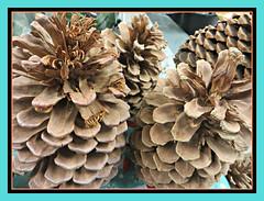 Nature's Pine Cones (bigbrowneyez) Tags: pinecones nature natura crafts seeds edible animals fun shapes details designs tan colourtones beautiful simplicity delightful special wonderful striking stunning fresh naturespinecones artful frame cornice earthy versatile
