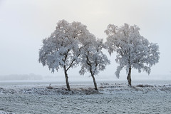 The sun was doing her best.... (lique1304) Tags: winter cold white landscape trees tree field outdoor nature landschape landscapephotography grey serene silence sellingen groningen