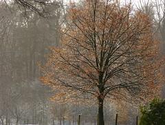 Happy tree (joeke pieters) Tags: 1320506 panasonicdmcfz150 woold winterswijk achterhoek gelderland nederland netherlands holland boom tree winter
