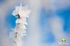Frozen (Lebenskunst.) Tags: frost reif raureif natur winter kälte eisblumen makro macro