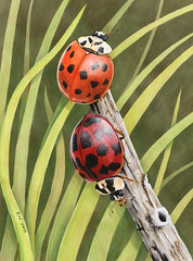 """Artwork """"Harlequin Ladybirds"""" 2015 (Wild Chroma) Tags: art nature illustration artwork drawing wildlife insects ladybirds markers letraset tria"""