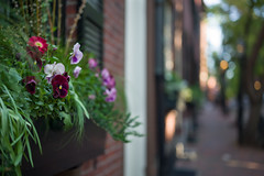 M1008650 (sswee38823) Tags: beaconhill flowers bokeh city boston bostonma newengland street leica leicam leicamtype240 leicacamera aposummicron aposummicron50 aposummicronm1250asph apo leicaapo502 leicaaposummicronm50mmf2asphfle leicaaposummicronm50mmasph leicaaposummicronm90mmf2asph aposummicron50mmf2