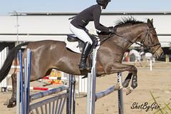 IMG_0934 (gavinglis) Tags: horses horse alec equestrian equine showjumping tamworth horseandrider