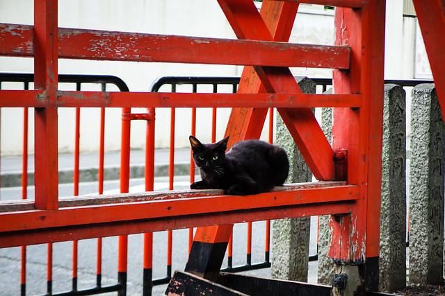 Today's Cat@2015-06-30