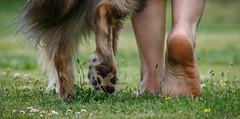 Ziemlich beste Freunde (b.stanni) Tags: summer dog friend friendship outdoor sommer hund freundschaft freund