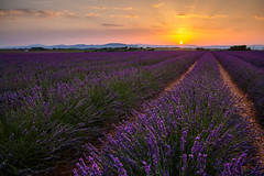 Provence (Francy_93) Tags: flowers sunset france tramonto lavender fields provence fiori lanscape provenza lavanda campi coltivati