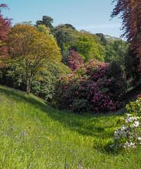 Glendurgan Garden (Mike Prince) Tags: trees england cornwall plantsandflowers glendurgangarden natureandenvironment