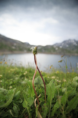 insieme fino alla fine (Meryia) Tags: lago ticino di fiori leone dente amare naret