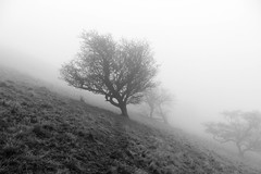 Misty Tree 1 (Concentricity) Tags: fog tree silhouette poor visibility winter dull day cracken edge derbyshire high peak district
