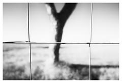 Tree (leo.roos) Tags: fence fencing hek tree solleveld distagon2128zf distagon carlzeissdistagon2128 zf cz a7rii dayprime day21 dayprime2017 dyxum challenge prime primes lens lenses lenzen brandpuntsafstand focallength fl darosa leoroos noiretblanc