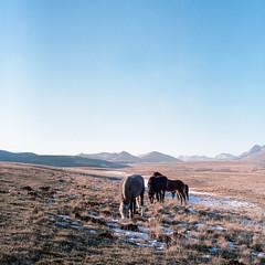 WILD (Pernin) Tags: abruzzo italy landscape horses mountains gransasso animals adventure wild