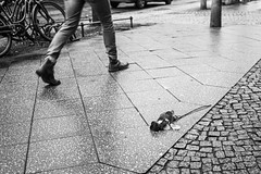 (Feininger's Cat (Thanks for 1.2 million views!)) Tags: meinfilmlab kodaktmax400 bessar3m 35mmffequiv street abandoned film fullframe zeiss cbiogont2835 zm reportage blackandwhite analog leicam rangefinder messsucher