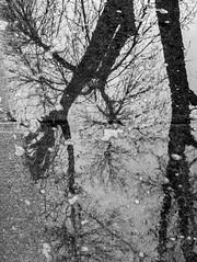 they paved paradise (jojoannabanana) Tags: 3652017 blackandwhite bleak canonpowershot gloomy melancholy psychological reflection shadow sidewalk silhouette snow s100 trees water winter