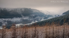 Greenhillstairs (.Brian Kerr Photography.) Tags: greenhillstairs moffat scotland dumfriesandgalloway winter visitscotland landscapephotography coldmorning mistymorning scotspirit trees nature naturallandscape sony a7rii availablelight