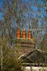 Clothes Drying Chimney (ianbartlett) Tags: outdoor chimney black headed gulls light ice flight