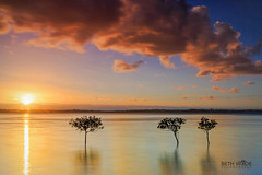 Sunset Light on the Bay (Beth Wode Photography) Tags: sunset dusk sundown sunsetclouds clou pinkclouds trees mangoves mangrovetrees treesinwater reflections 3trees beth wode bethwode le seascape