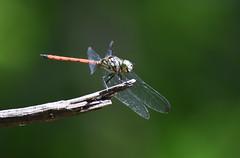 DSC_3081 (olyaterekhova) Tags: nature singapore bukit timah park