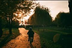 23000036 (tarteltarantel) Tags: bike bicycle sun sunset nature child green analoguephotography analog fotoğraf güneş günbatımı doğa bisiklet türkiye izmit kocaeli seka ağaç fotoblog photograhpy photographer vsco vscocam vscoturkey