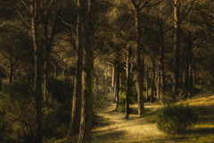 Enchanted Forest (suzanne~) Tags: pine forest andalusia spain texture painterly
