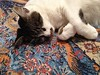 Rêverie a la Paradis (Fyodor & Mila) Tags: droom dream rêverie paradijs paradijsvogel oiseau paradis kat cat oosters tapijt tapis