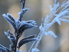 IMG_1243 (germancute) Tags: outdoor nature winter landscape landschaft thuringia thüringen germany germancute deutschland ilmkreis january wald forest