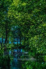 peace (NoOneLikeMe78) Tags: trees reflection water reflections landscape reflecting scotland sony lochlomond ballochcountrypark marilynconnor