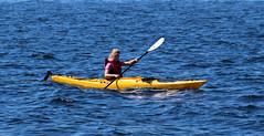 Kayaking the Oslofjord (Ib Aarmo) Tags: sea yellow kayak paddle kayaking oar fjord