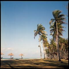 'Wind Blows'. . . (Hafiz_Markzzaki) Tags: 6x6 mamiya tlr beach mediumformat landscape scenery kodak ishootfilm terengganu coconuttrees filmphotography portra160 filmisnotdead c330s setiu negativescanned sekor80mmf28 twinlensreflect canoncanoscan8800f filmshooters kampungmangkuk hafizmarkzzaki