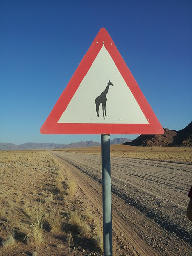 Attention aux girafes, Namibie