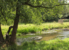 """""""Summer River"""" (Adam Swaine) Tags: uk trees summer england english nature rural canon river countryside kent rivers tranquil riverdarent eynsford 2015 swaine darent englishrivers"""