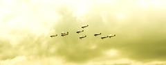 Bandits at three o'clock (#Weybridge Photographer) Tags: show slr plane canon vintage airplane eos fly flying aviation air tiger moth battle aeroplane formation airshow adobe dslr tigermoth bandits biplane lightroom 40d