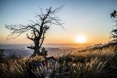 Mt Ord Sunset (Taking You Higher Photo) Tags: sunset arizona mountains tree desert sony az sonorandesert a7s arizonapassages
