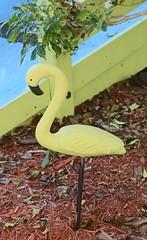 . (SA_Steve) Tags: villageofthearts bradentonfl bradentonflorida colorful colors colour colours florida manateecounty bradenton creative flamingo yellow usa america unitedstatesofamerica unitedstates