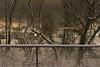 Sainte-Catherine (Bo No Bo) Tags: d7100 saintecatherine québec hiver winter soir night clôture clôturefrost arbre tree neige snow rivière river jaune yellow