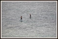 DSC_0770 November 12, 2016, paddle boarders, Hanalei Bay, Kaua'i, Hawai'i (steveto2645) Tags: paddleboarders hanaleibay kauai hawaii